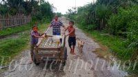 Senora Sofia de Carvalho do Nascimento ho nia oan sira hodi karosa ba kuru iha aldeia Hare kain, suku Raimea, Postu Zumalai, Tersa (2/2). Foto Tempo Timor.